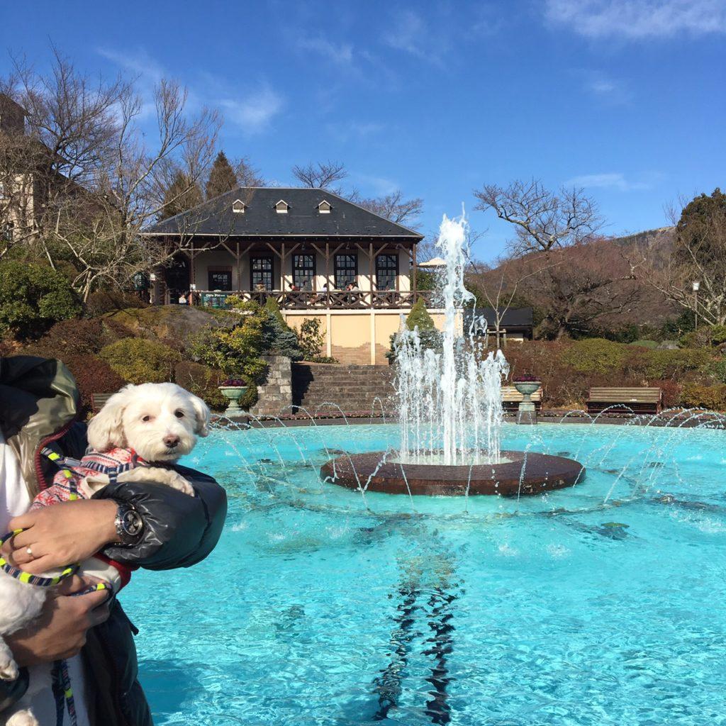 犬と旅に出よう!犬と旅をすると一緒に写真も撮れる!うめこと一緒の画像。