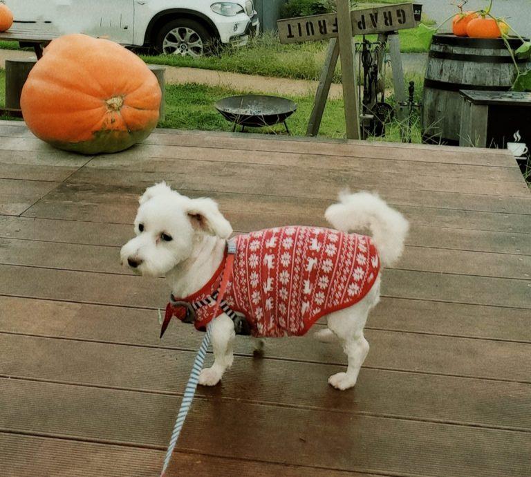 犬と泊まれる宿!藤乃煌 富士御殿場 実際に宿泊した際のうめこの写真です。