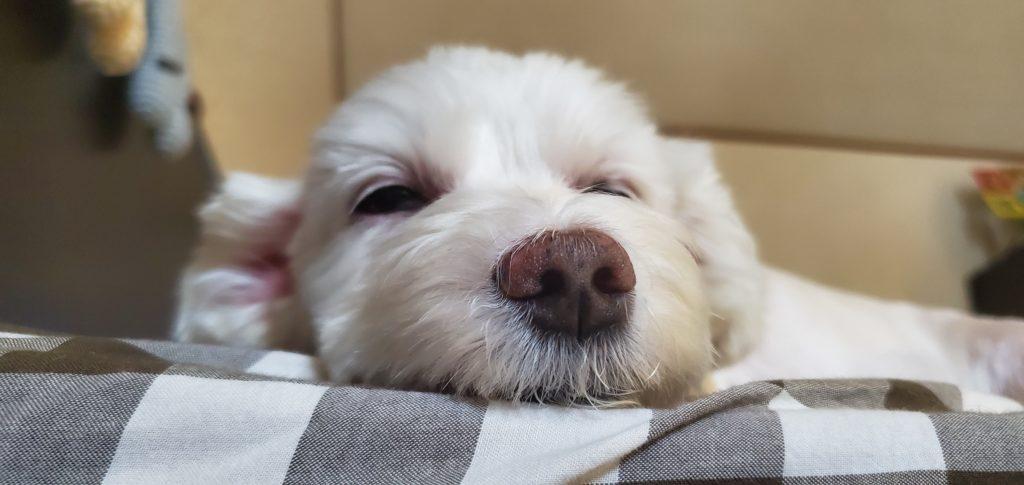 眠たそうなうめこの写真