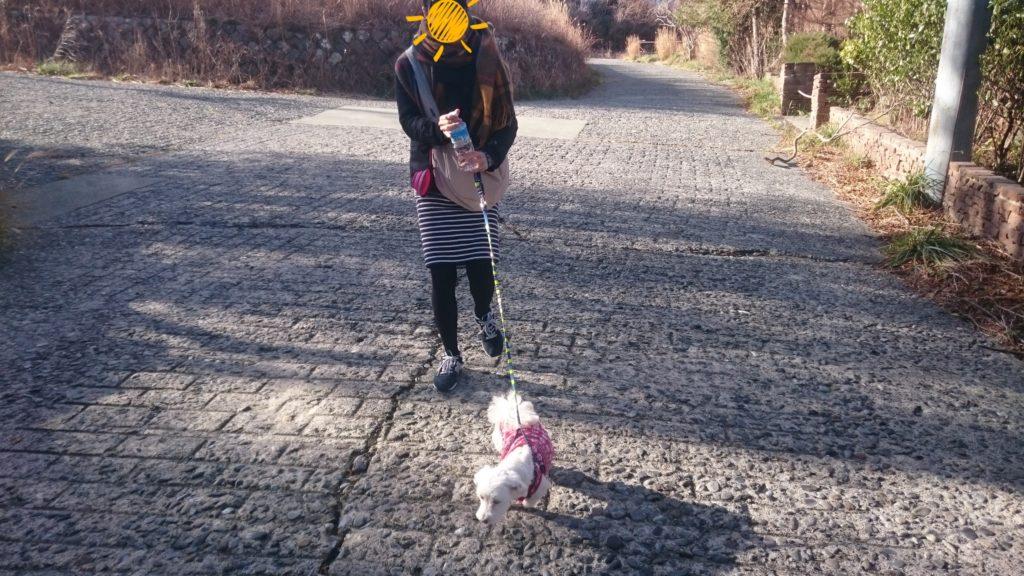 うめこと朝の散歩