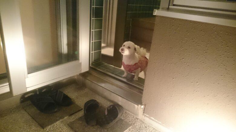 温泉に入りたそうな愛犬「うめこ」の写真