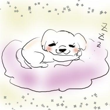 犬の睡眠時間を調べてみた!