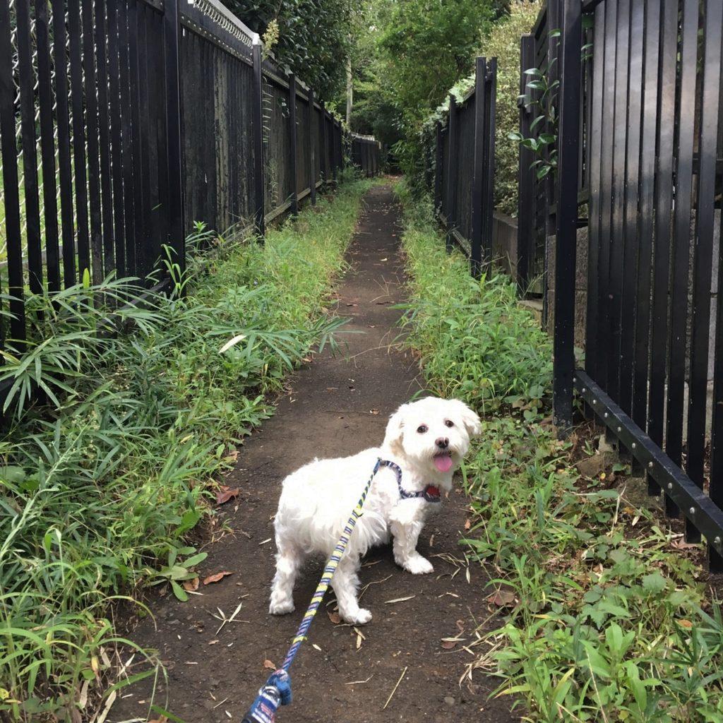 うめこと散歩の写真