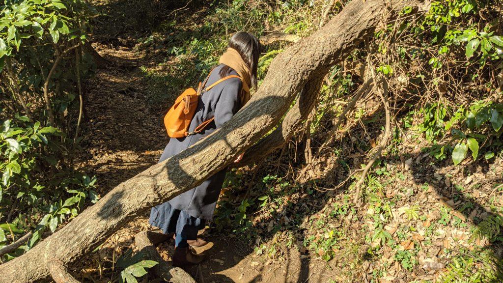 佐助稲荷神社へ続く道。倒木で道がふさがれている画像。