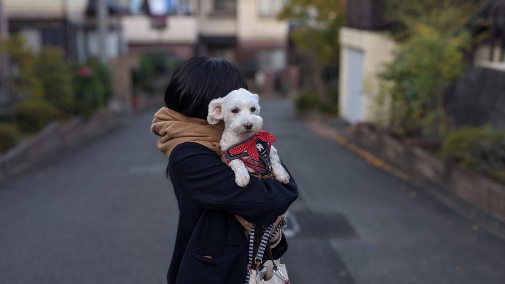 Pixel4で撮影した散歩の時の愛犬の写真。その2