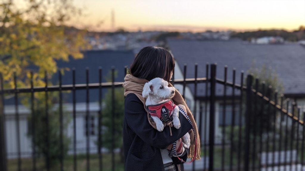 Pixel4で撮影した散歩の時の愛犬の写真。