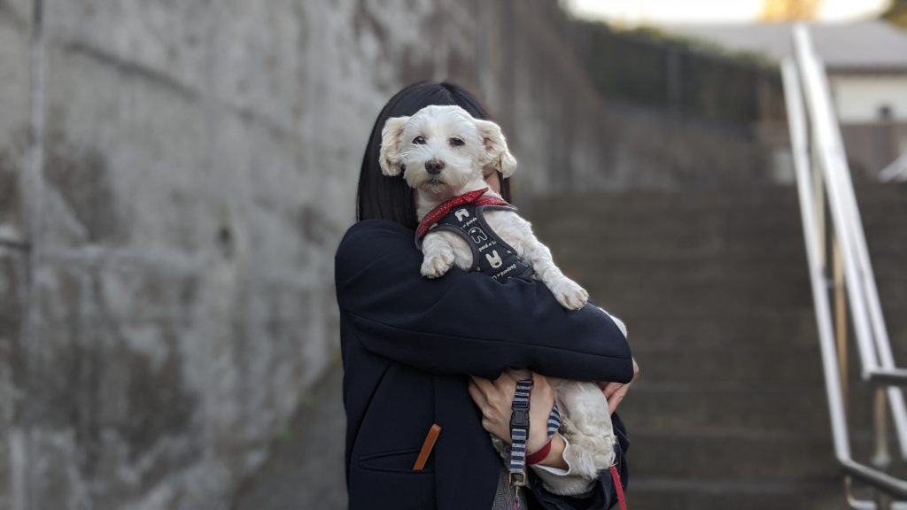 Pixel4で撮影した散歩の時の愛犬の写真。その3