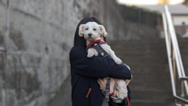 Pixel4で撮影した愛犬の写真です。