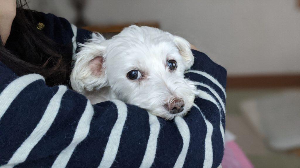 Pixel4で撮影した家でくつろぐ愛犬の写真。その3