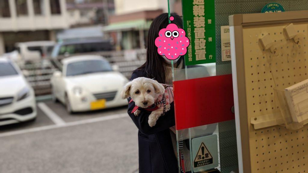 Pixel4で撮影した家でくつろぐ愛犬の写真。郵便局でパパを待ってます。