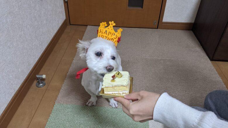 誕生日ケーキを食べるうめこの写真。